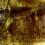 nathalie-tirot-nature-morte-fleurs