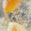 tulipes-jaunes-nathalie-tirot-