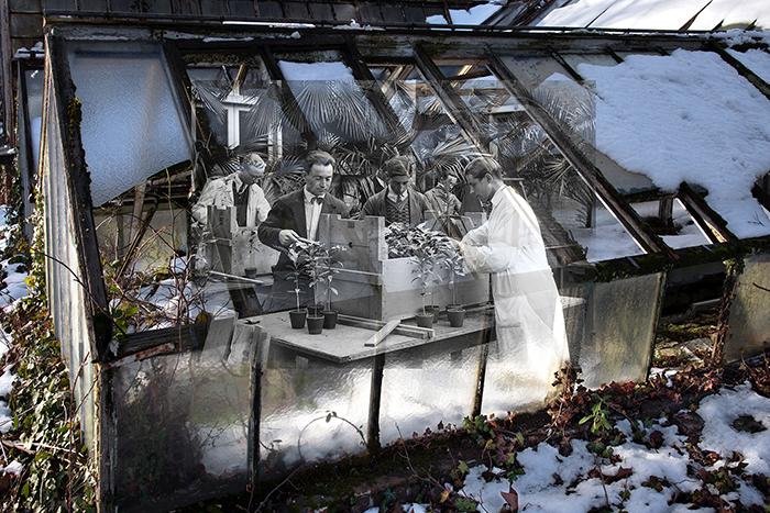 Les plants cultivés dans le Jardin d Agronomie Tropicale de Paris sont expédiés dans des caisses vers les jardins d'essais des Colonies.jpg